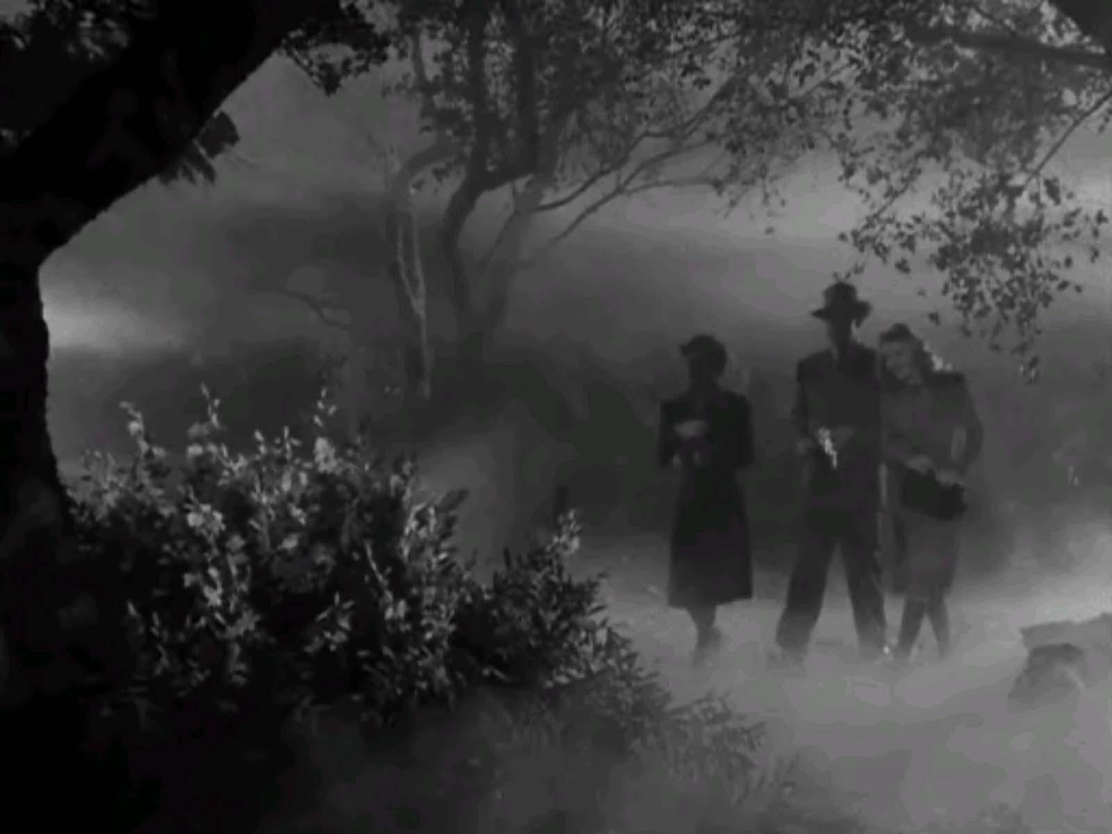 wolf-man-fog.jpg